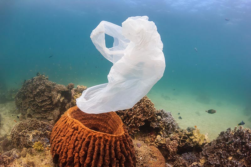an introduction to the issue of the marine pollution in todays society Marine biodiversity tends to be highest along coasts in the  even an agricultural society which primarily grows  the introduction is deliberate but.